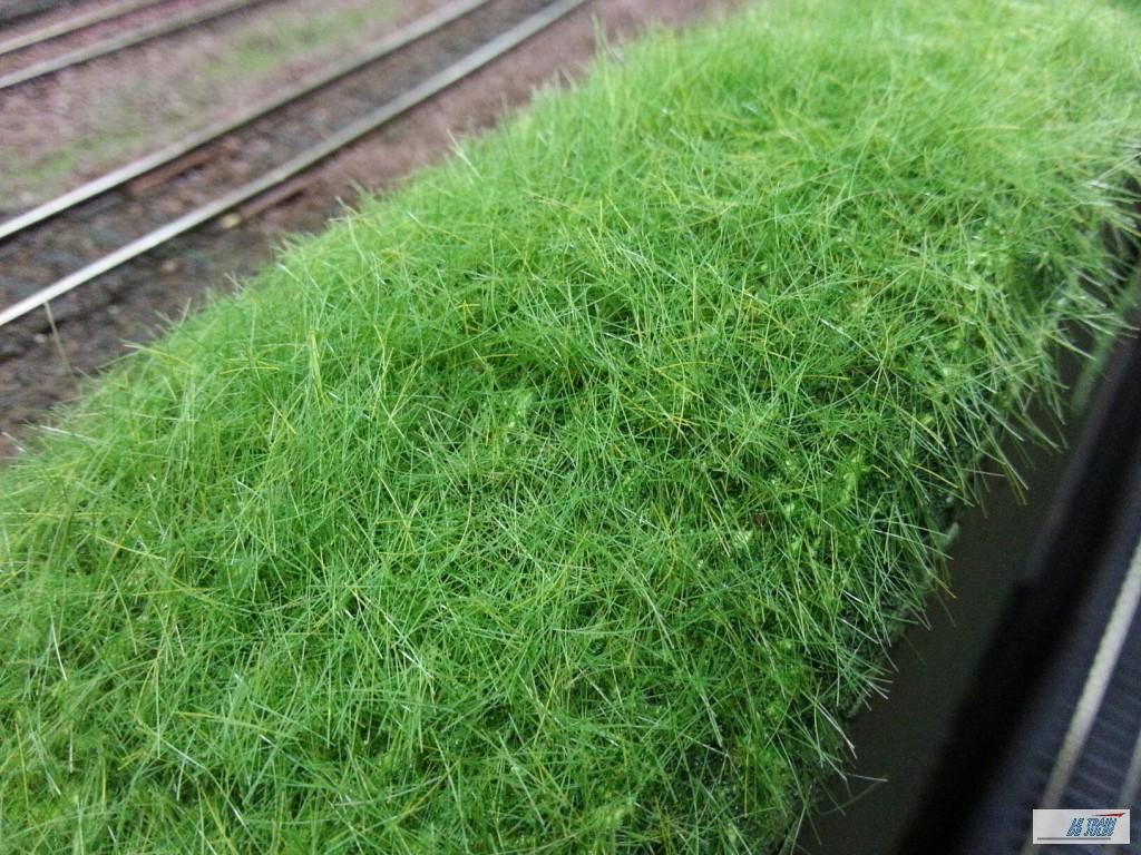 Verte pelouse
