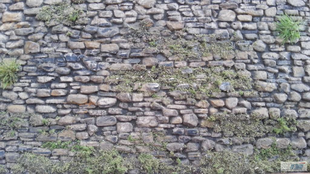 Mur en végétation.