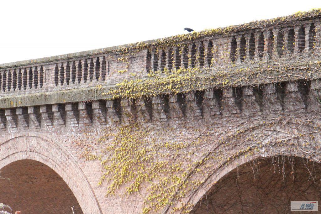 Le lierre sur le Viaduc